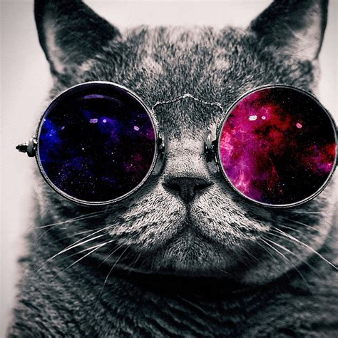 wallpaper cat 3d glasses cat on colored glasses desktop wallpapers 1024x1024