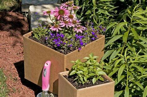 ima put you to bed gardening gardening basics cardboard gardening