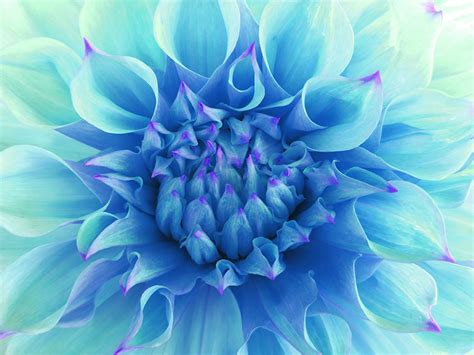 aquarius color we guess your favorite color according to your zodiac sign
