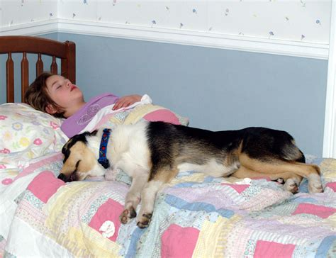 sleeping in my bed remix file girl asleep with her smooth collie jpg wikimedia