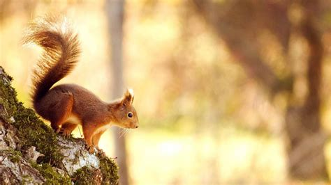 fotos animales wallpapers fondos de pantalla de animales elmundodelosanimales