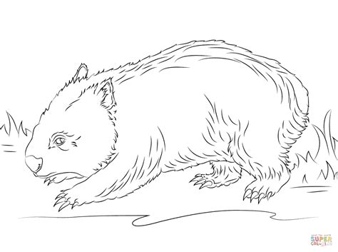 cute wombat coloring page supercoloring com