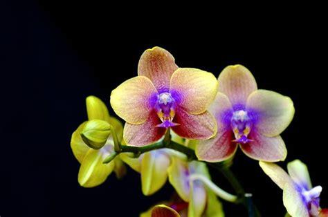 orchidee fiori sentimento il verde come crescere