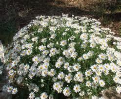 fiori da bordura pieno sole i fiori d aprile fiorista roberto di guida