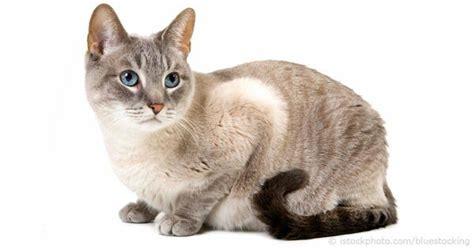 kumpulan gambar kucing  menggemaskan