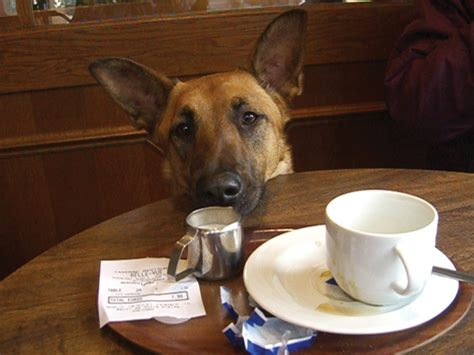 can dogs coffee don t feed your these it s deadly for its health
