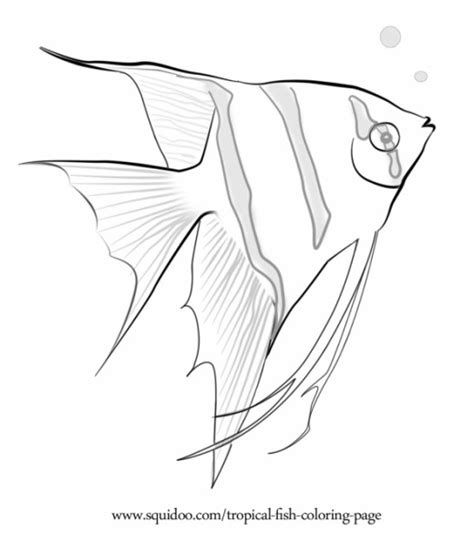 coloring pages of saltwater fish tropical fish coloring page tropical fish embroidery