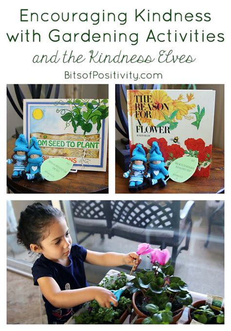 indoor gardening activities cycle of a bean plant and seed planting activities