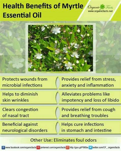 health benefits of swinging 12 best images about myrtle young living on pinterest of