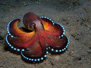 colorful octopus colorful coconut octopus with glowing veins the coconut