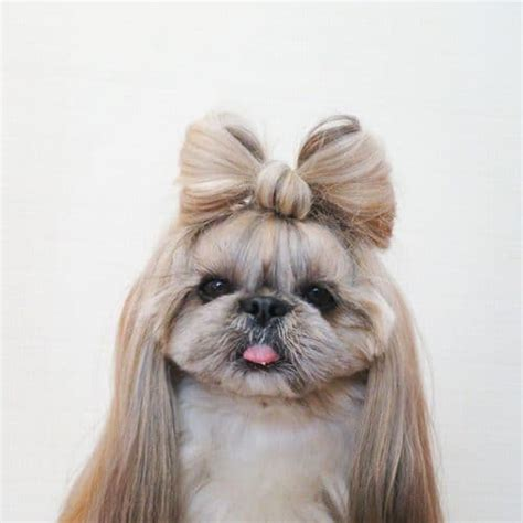haircut ideas for hair dogs adorable dog hairstyles iles formula