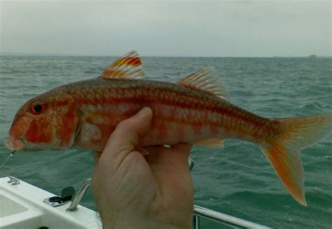 red boat fish sauce uk test page boat angling