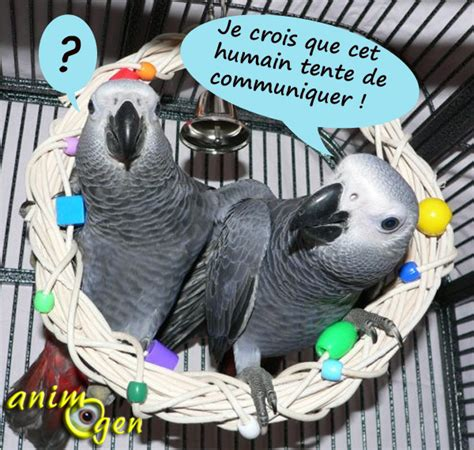 Modification Nom De Famille by Le Changement De Nom D Un Perroquet Choix Et Cons 233 Quences