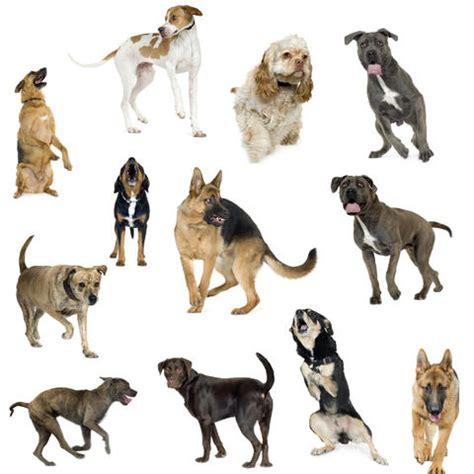 different races of dogs devinez 224 quelle race de chien j appartiens chiens wamiz