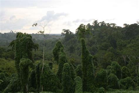 Kin Link Inn Miri Malaysia Asia borneo rainforest resort miri picture of miri miri