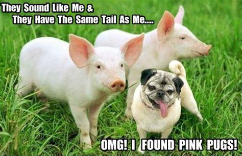 Piglet Meme - funny pug dog meme pun funny pug dog memes captions lol