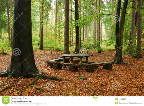 bench in forest bench in forest royalty free stock photo image 11302055
