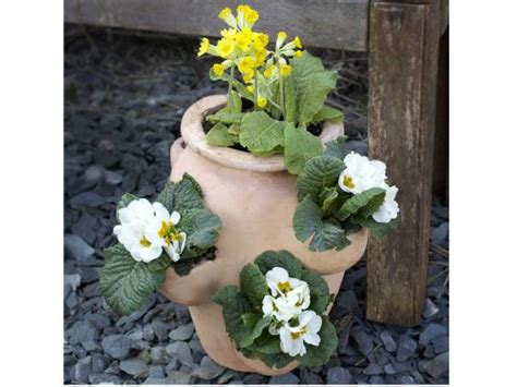 national gardening week   containers  independent