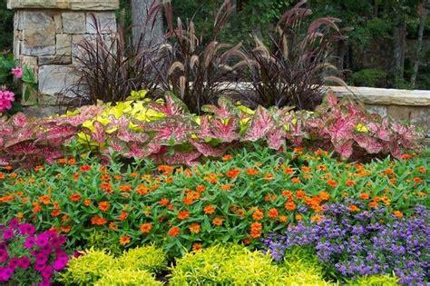 Summer Garden Zinnias Ageratum Blue Daze Periwinkle Summer Garden Ideas