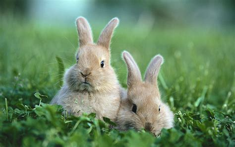 cute rabbit hd wallpaper cute rabbit wallpapers rabbit desktop wallpapers 1080p