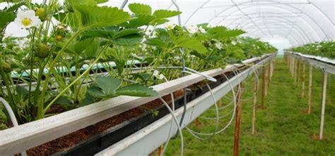 serre quatre saisons culture des fraises en serre conseils gestion du climat