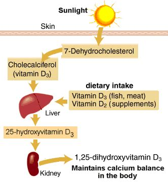 vitamin d le is your vitamin d supplement helping or hurting you