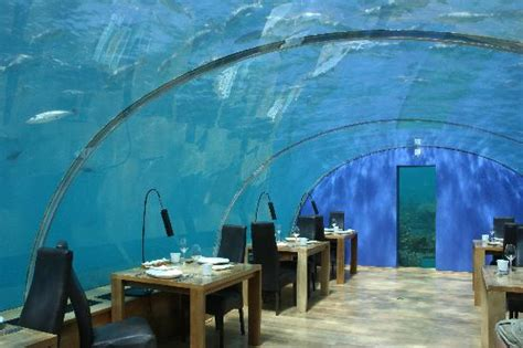 ithaa undersea restaurant outside picture of ithaa undersea restaurant rangali