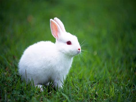 wallpaper cute rabbit rabbits wallpapers bunny desktop wallpapers best hd