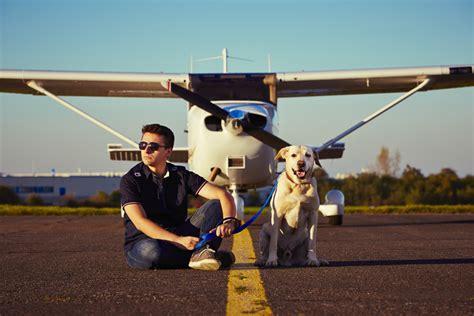 portare gatto in aereo viaggiare con il o con il gatto in aereo ferplast