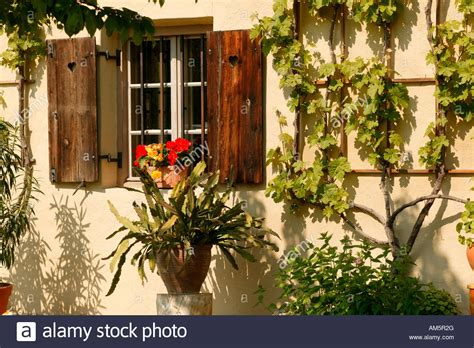 flowerbox deutschland window with begonia flower box schlumbergera and vines