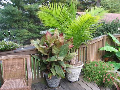 Patio Palm Tree by Small Space Garden With Palm Tree Spaces Places
