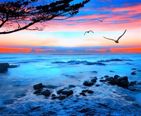 gabbiano mare scaricare gli sfondi tramonto mare gabbiani paesaggio
