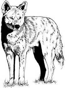 coyote coloring page free coyote coloring page