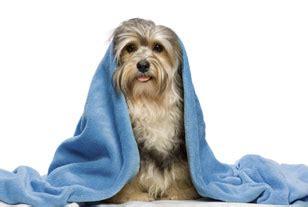 dog haircuts edmonton pet grooming edmonton pet grooming services by edmonton