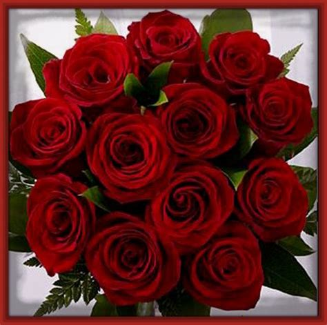 imagenes bonitas rosas rojas imagenes de rosas rojas con versos romanticos imagenes