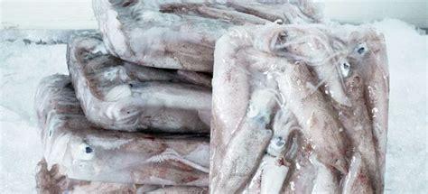 come cucinare calamari come cucinare i calamari surgelati cucinarepesce