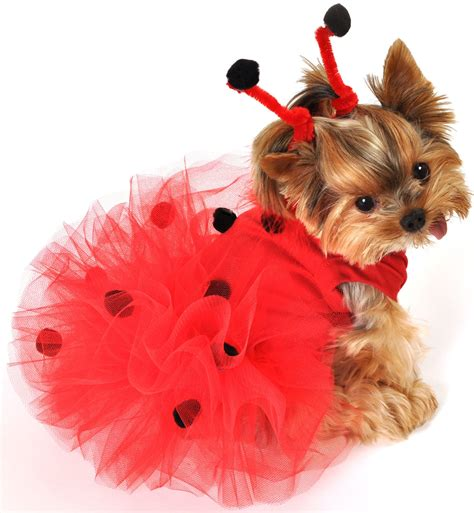 puppies in costumes custumes pet costumes puppy costume ladybug holidays