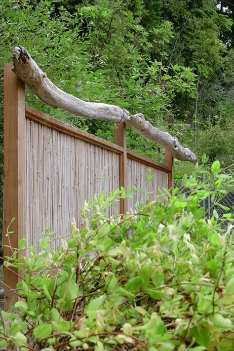 images  bamboo fences  pinterest