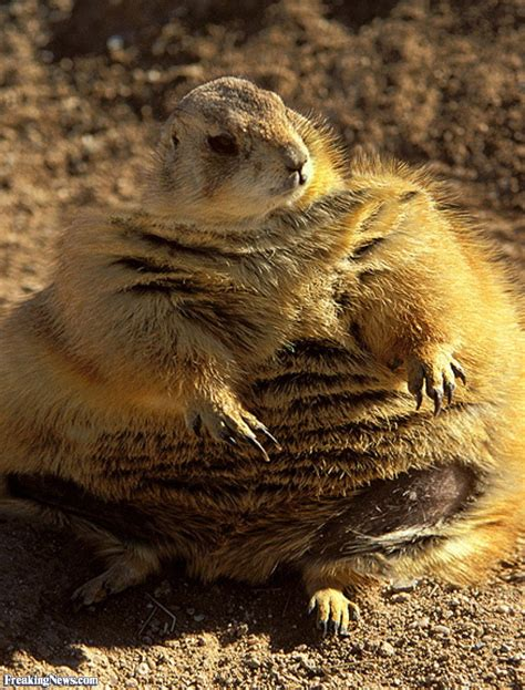 Fat Animals Pictures   Freaking News