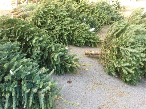 the guardsmen christmas tree lot temp closed 42
