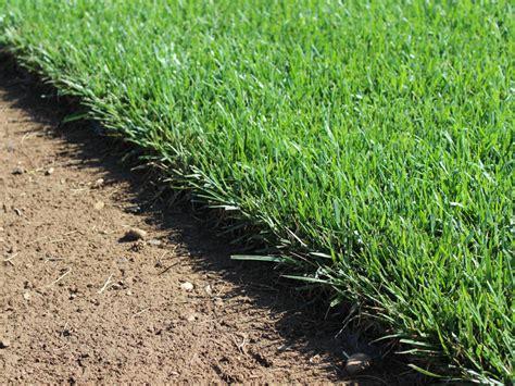 tappeto erboso sintetico a rotoli prezzi manto erboso prato pronto in rotoli invernizzi