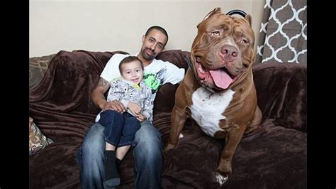 all about the dogs top 25 largest breeds in the world all breeds list in the world a to z