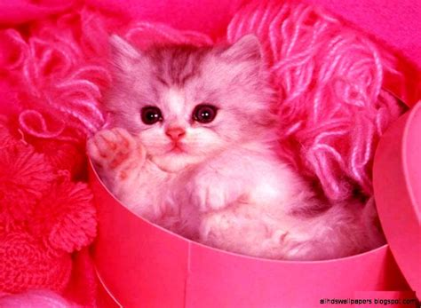 cute cat  pink background  hd wallpapers