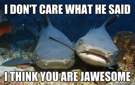 baby shark meme i don t care what he said i think you are jawesome