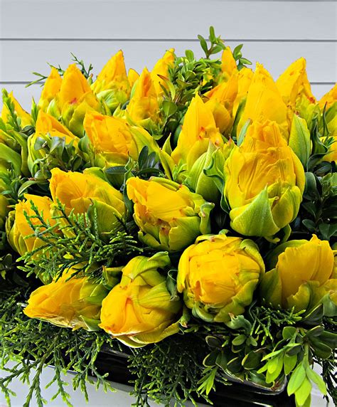 catalogo fiori bakker gef 252 llte tulpen tropical wave kaufen bakker