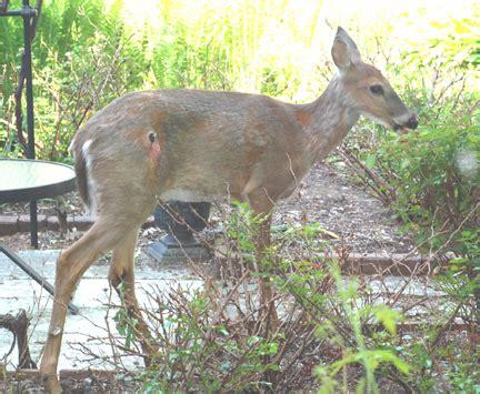 what can i feed deer in my backyard deer