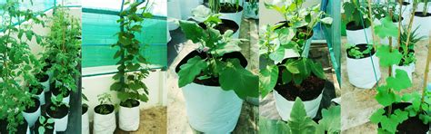 Grow Bag Gardening by Grow Bags For Gardening Pioneer Agro Industries