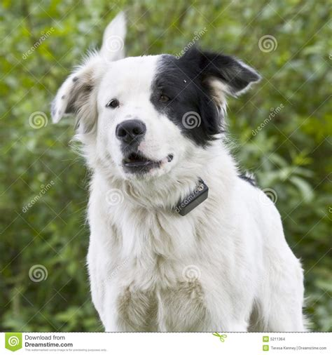 what is a mutt mutt stock images image 5211364