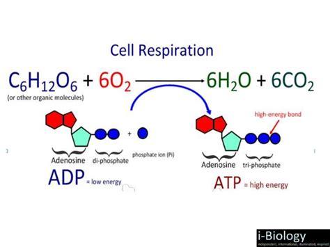 design lab on respiration cellular respiration experimental design research paper