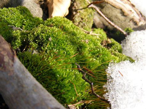 sun moss snow by tomorrowphotographer on deviantart